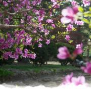 main_spring_2